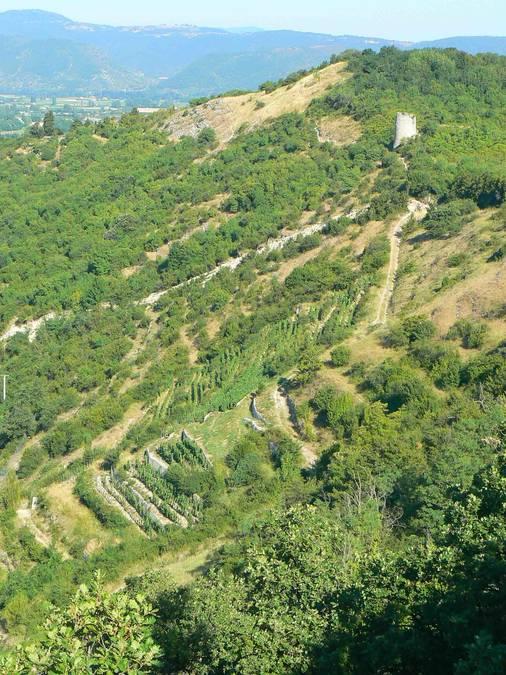 Visuel 1/1 : Coteaux viticoles de la Côte de Brézème à Livron