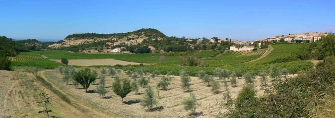 Visuel 1/2 : Pentes et coteaux vinicoles