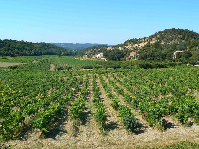 Visuel 2/2 : Pentes et coteaux vinicoles