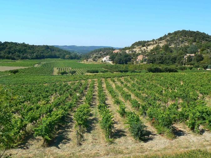 Visuel 2/2 : Pentes et coteaux vinicoles de Rousset-les-Vignes
