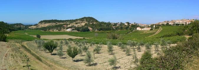 Visuel 1/2 : Pentes et coteaux vinicoles de Rousset-les-Vignes