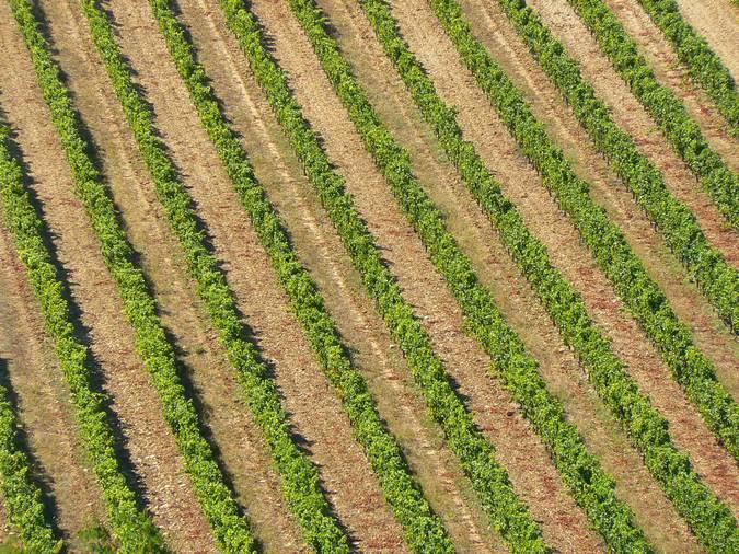 Visuel 2/2 : Coteaux et collines viticoles de Vinsobres
