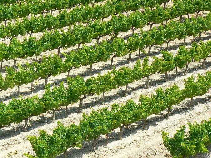 Visuel 4/4 : Plateau viticole des Estangs dans le pays nyonsais