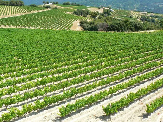 Visuel 2/4 : Plateau viticole des Estangs dans le pays nyonsais