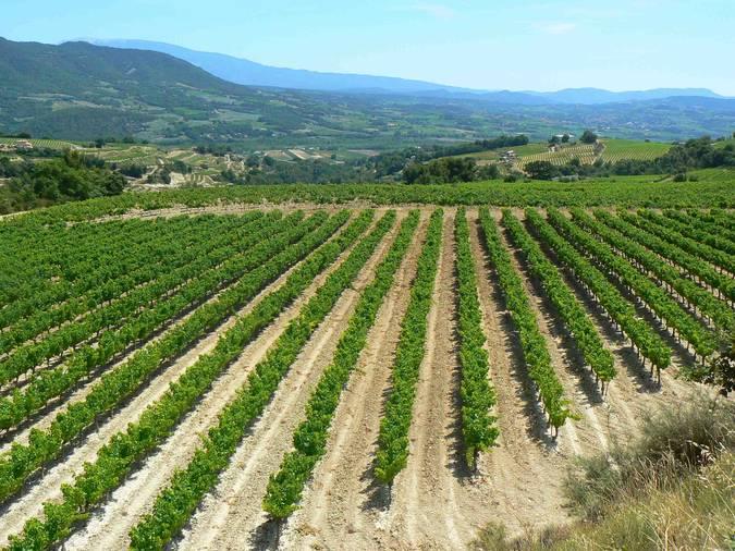 Visuel 1/4 : Plateau viticole des Estangs dans le pays nyonsais