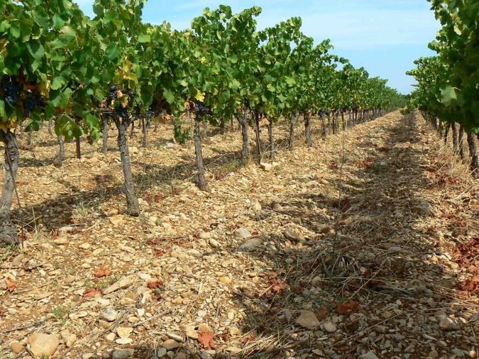 Visuel 2/4 : Plaines viticoles de Suze