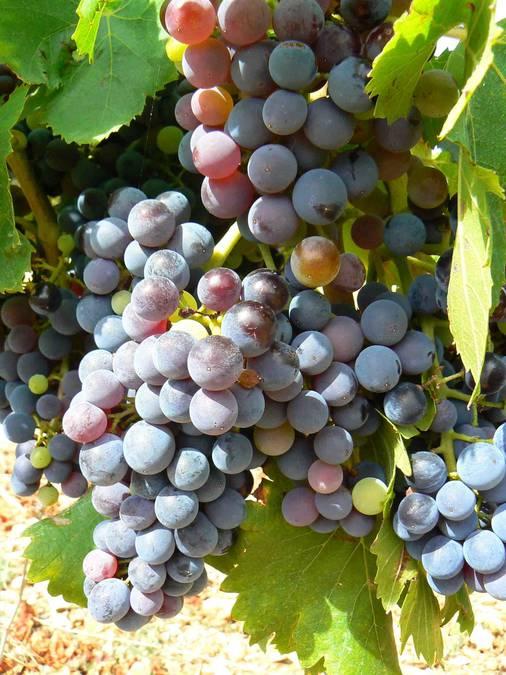 Visuel 1/4 : Plaines viticoles de Suze-la-Rousse
