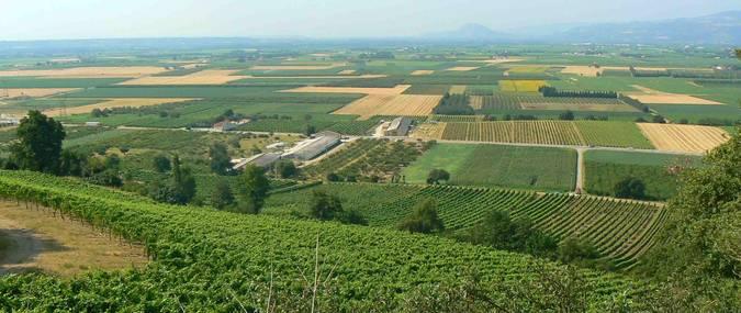 Visuel 1/2 : Coteaux et plaines viticoles