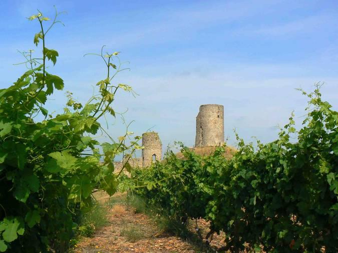 Visuel 2/2 : Coteaux et plaines viticoles