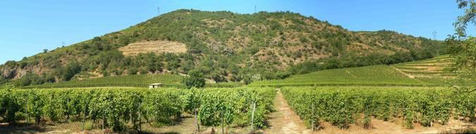 Visuel 1/2 : Coteaux viticoles à pentes