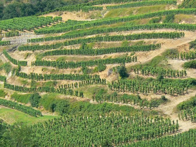 Visuel 2/2 : Coteaux viticoles à pentes
