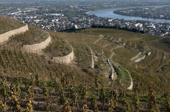 Visuel 1/3 : Coteaux viticoles à pentes de l'Hermitage