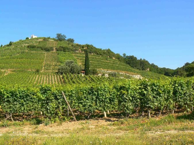 Visuel 1/3 : Coteaux viticoles à pentes