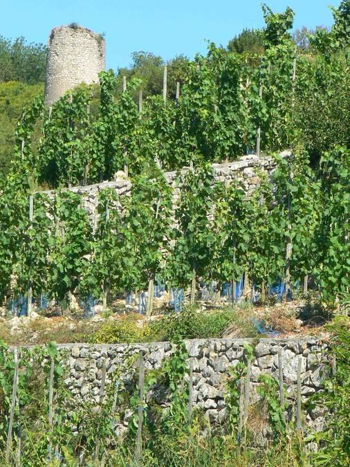 Visuel 2/2 : Murs de soutènement des coteaux de la Côte de Brézème