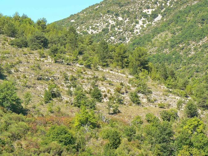 Visuel 2/3 : Terrasses de culture de Rochebrune