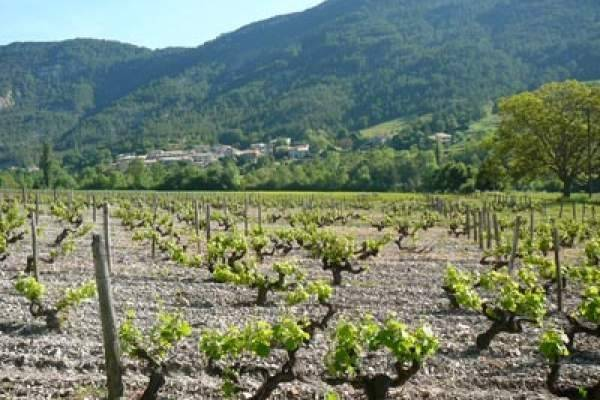 Visuel 1/1 : Circuit des vignes de clairette à Ponet