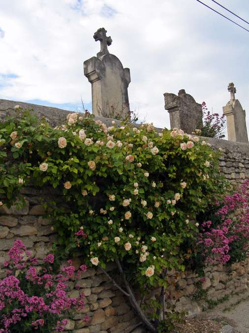 Visuel 1/1 : Grignan, Pierres et Roses Anciennes