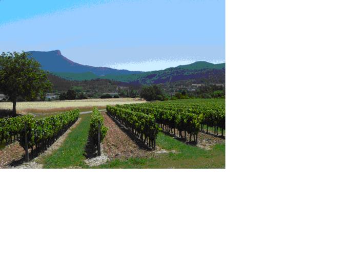 Visuel 1/1 : Vignes et Rochecolombe