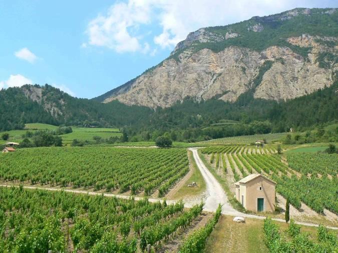 Visuel 1/2 : Coteaux viticoles