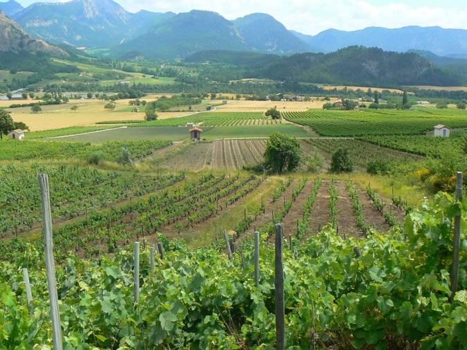 Visuel 2/2 : Coteaux viticoles