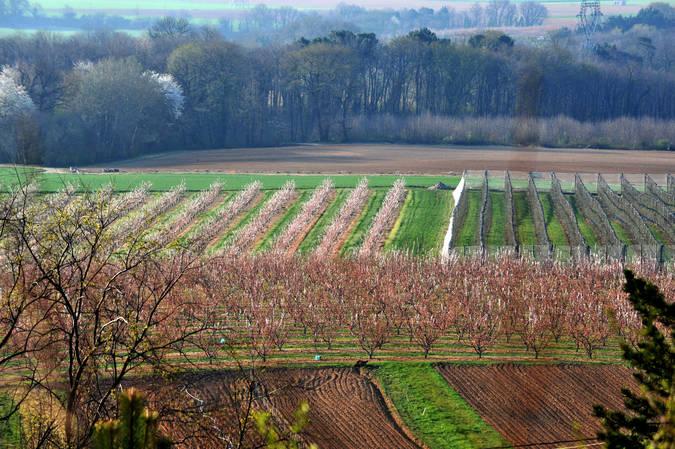 Visuel 1/2 : Arboriculture