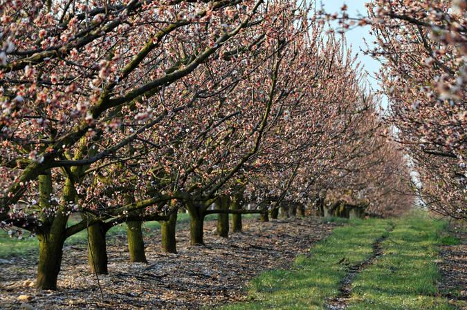 Visuel 2/2 : Arboriculture