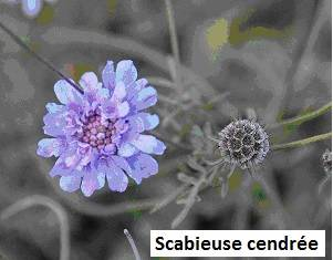 Visuel 2/4 : Site NATURA 2000 Sables de l'Herbasse