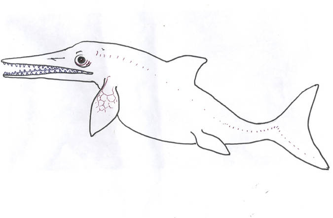 Visuel 4/4 : L'ichtyosaure de Valdrôme