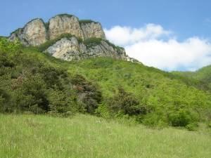 Visuel 1/6 : Les Orchidées des Monts du Matin