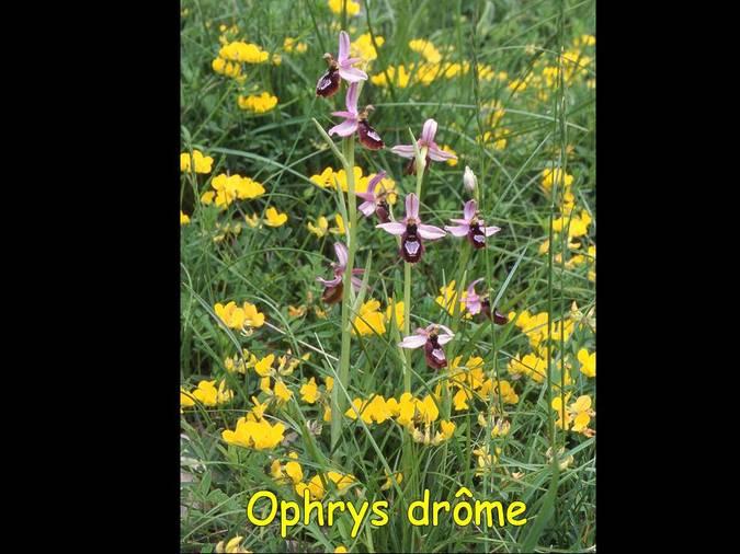 Visuel 5/6 : Les Orchidées des Monts du Matin