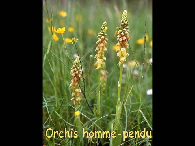 Visuel 6/6 : Les Orchidées des Monts du Matin