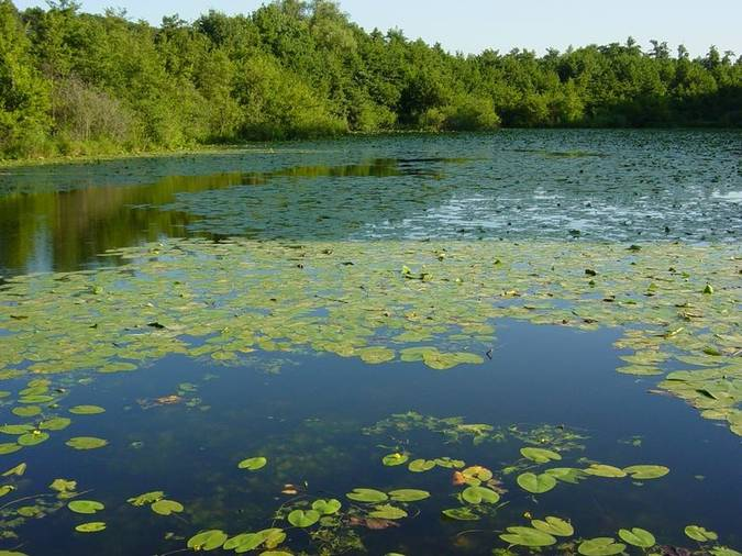 Visuel 2/5 : L'étang du Mouchet