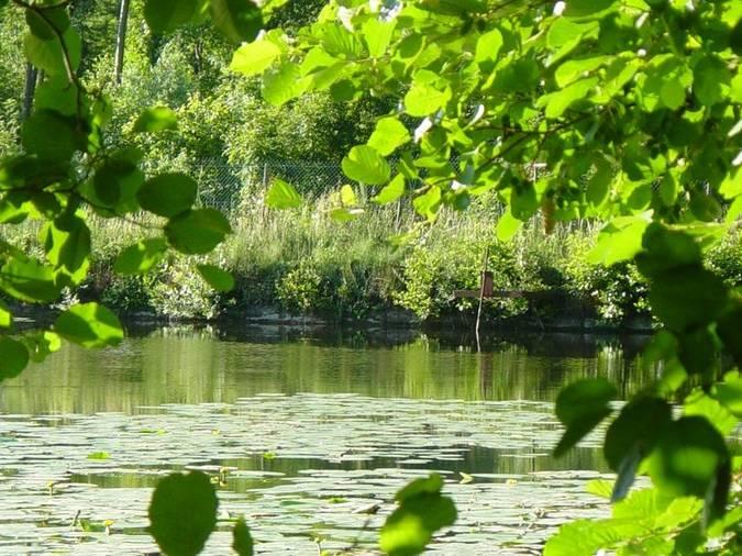 Visuel 3/5 : L'étang du Mouchet