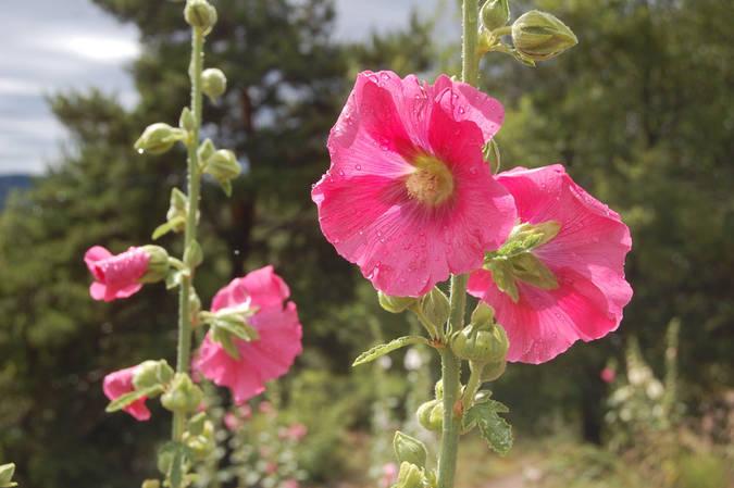 Visuel 1/1 : Calade des Passe-Roses