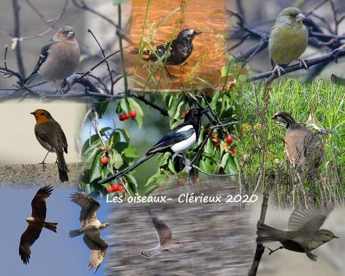 Visuel 3/9 : CONFINEMENT : La nature autour de chez-soi