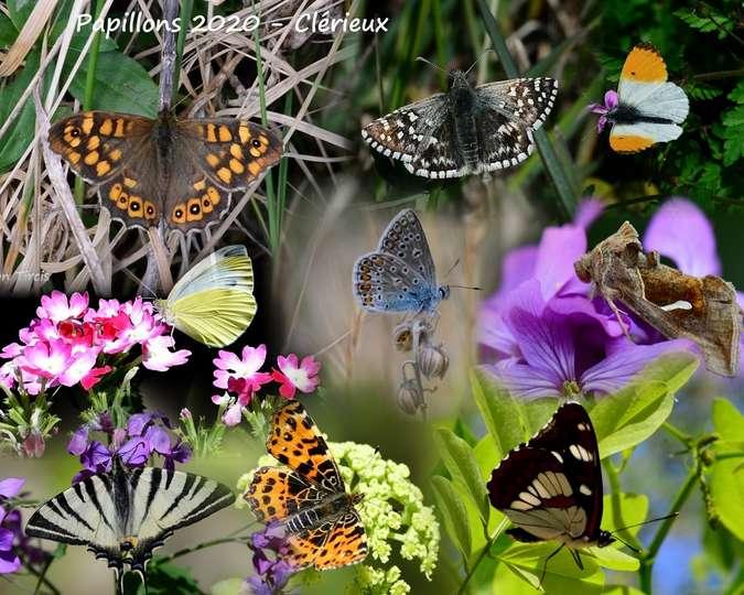 Visuel 9/9 : CONFINEMENT : La nature autour de chez-soi