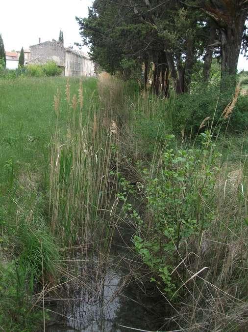 Visuel 3/4 : Canal St Martin à Taulignan