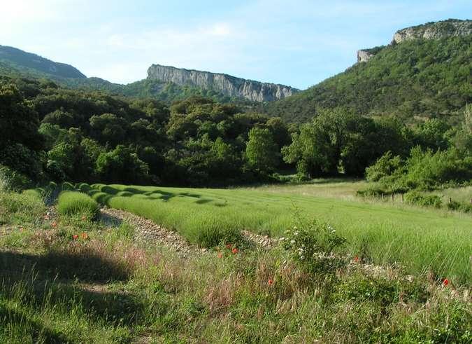 Visuel 1/1 : L'oppidum en éperon barré du Rocher des Aures